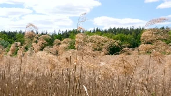Slow Reeds