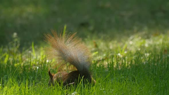 Close up of a squirrel in the grass
