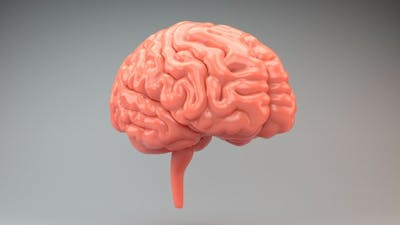 Brains Pink