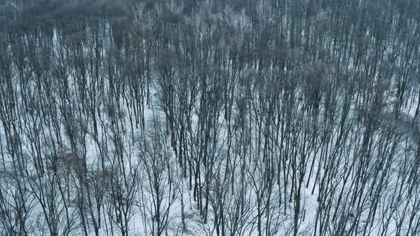 Thumbnail for Aerial Winter Forest
