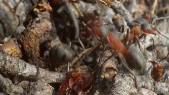 Thumbnail for Wild Ant Hill in the Forest