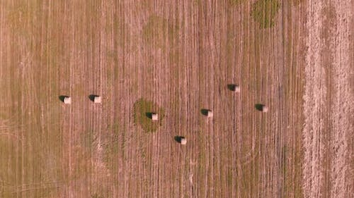 Hay bales on field after harvest. Agricultural field.