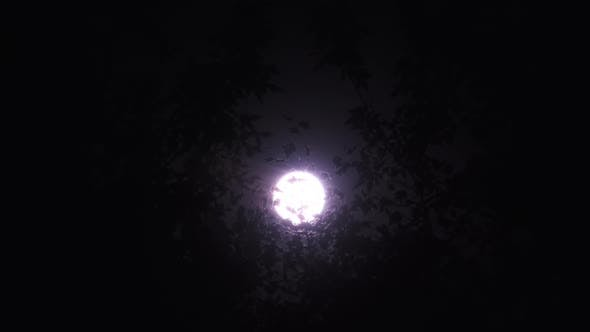 Thumbnail for Full Moon at Night on the Background of Silhouettes of Tree Branches and Foliage