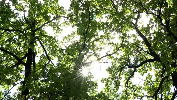Thumbnail for Autumn Sun Rays Among The Branches Of The Trees 2