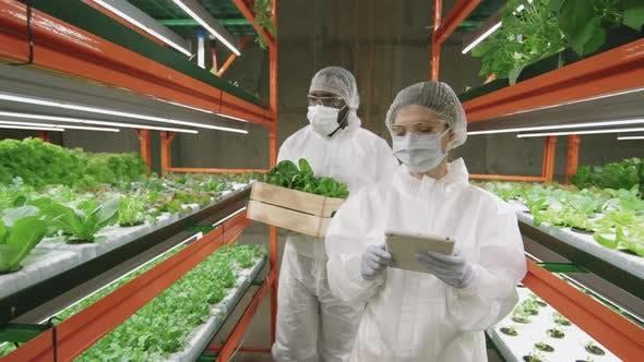 Agroengineers Working In Vertical Farm