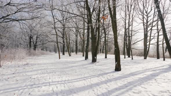Thumbnail for Beautiful Winter Forest. POV Video