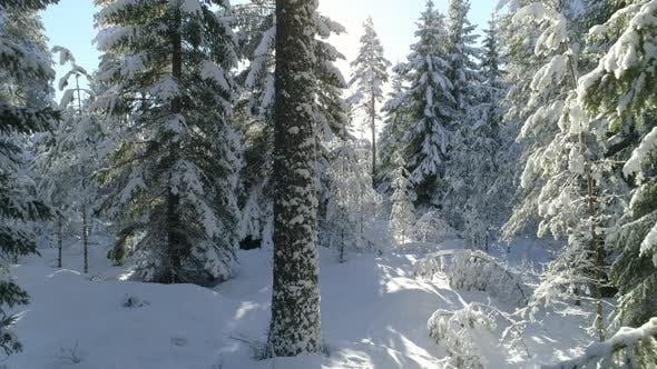 Thumbnail for Forest Winter Wonderland