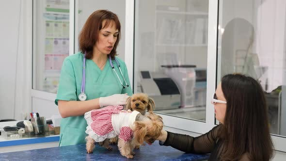 Veterinarian Consults Owner of Yorkshire Terriers
