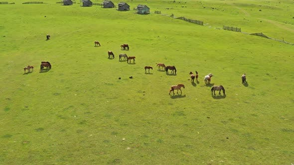 Thumbnail for Aerial Around View of Grazing Horses in Mongolia