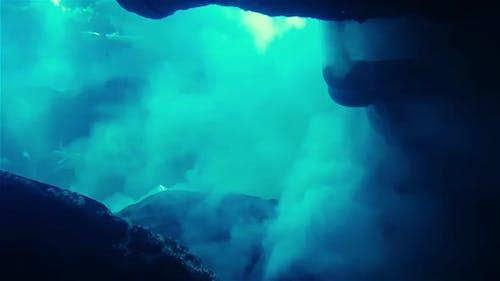Underwater Big Fishes