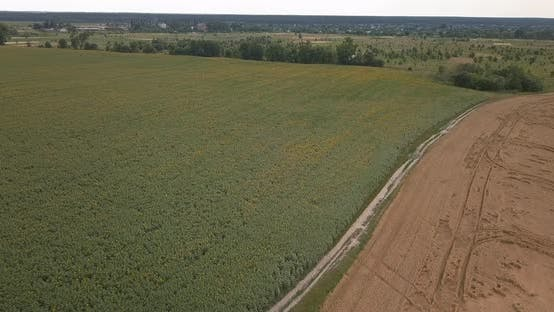 Thumbnail for Drone Flight Over a Wheat Field on a Summer, Sunny Day
