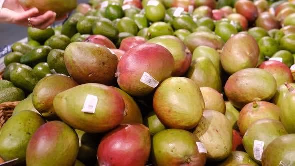 Hands of woman choosing mango at fruit market.