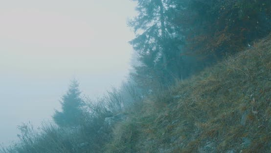 Thumbnail for Mountain Foggy Forest