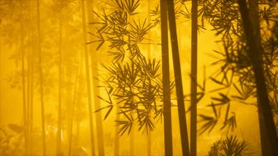 Asian Bamboo Forest with Morning Fog