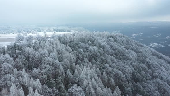 White Forest in Winter