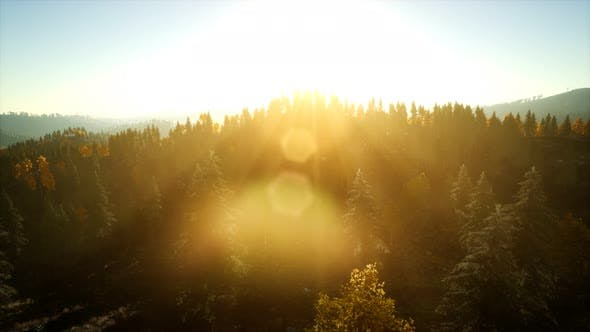 Thumbnail for Aerial View of the Beautiful Autumn Forest at Sunset with Green Pine Trees