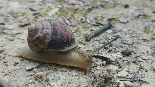 Thumbnail for Snail Crawling on the Road