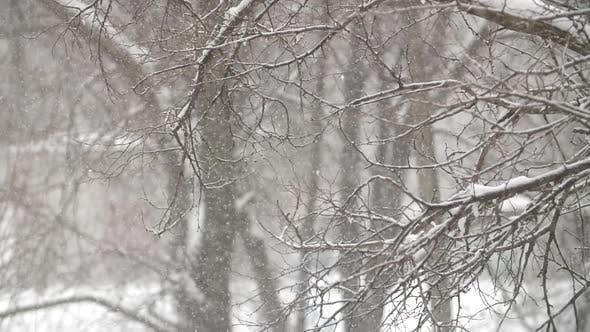 Thumbnail for Snow Fall at Park