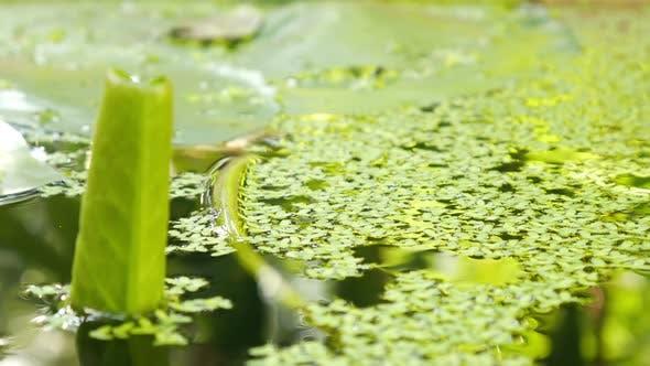 Thumbnail for Pond 01