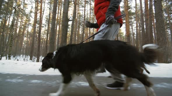 Thumbnail for Sequence of Man and Woman Running with Dogs
