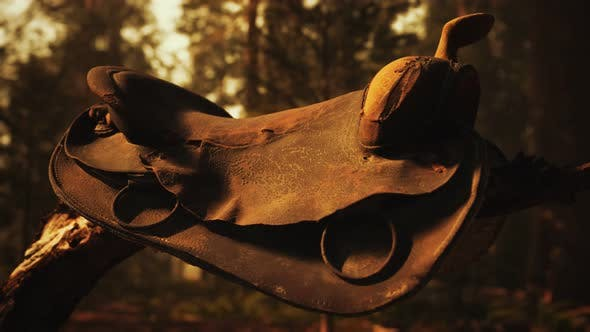 Vintage Leather Horse Saddle on the Dead Tree in Forest at Sunset