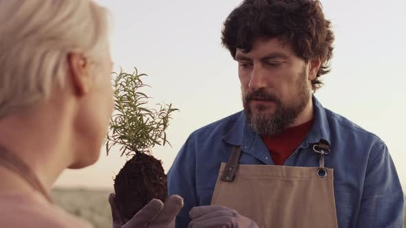 Thumbnail for Two Professional Farmers Discussing Plant