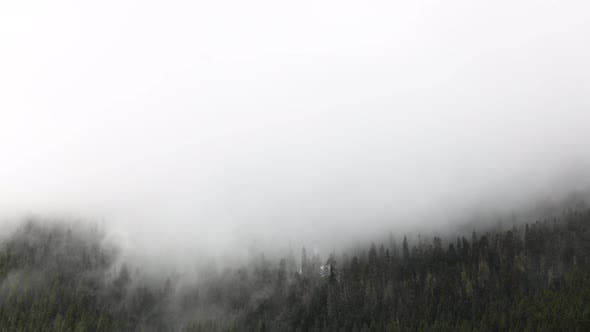 Fog Clouds Dissipation Of Water Moisture Pacific Northwest Washington State Usa Evergreen Forest