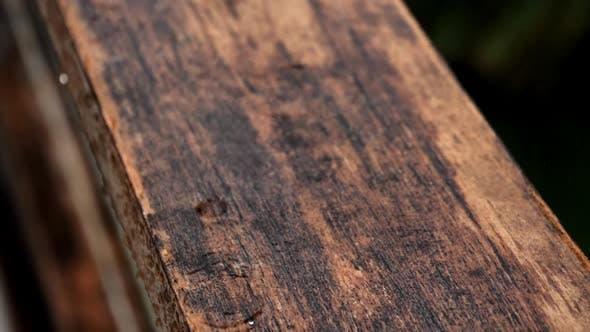 Thumbnail for Rain on Wood