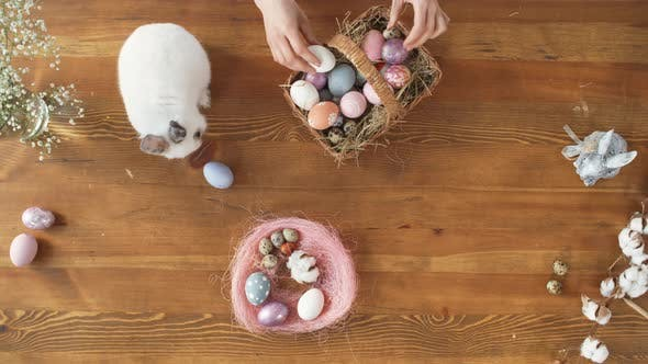 Thumbnail for Top View of Bunny and Easter Eggs