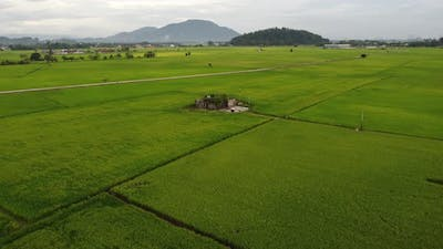 Abandoned house in the paddy field.
