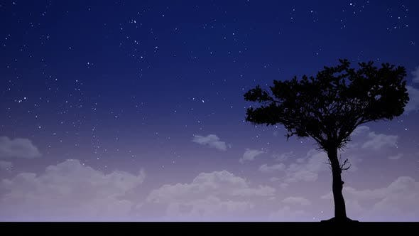 Cover Image for Big Tree at Night