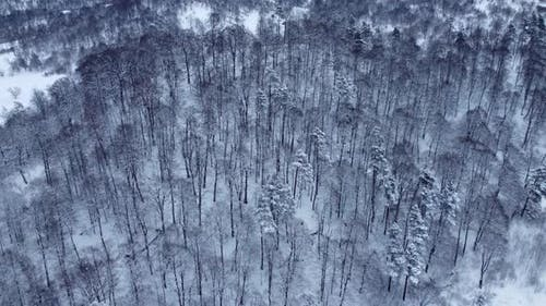Snowy Forest Aerial