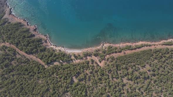 Sea Forest Enchanting Mediterranean