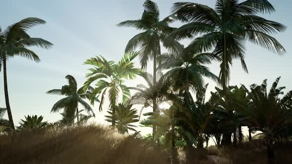 Tropical Beach in Sunny Day