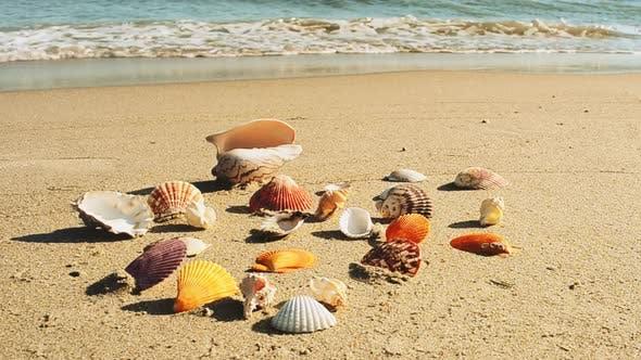 Thumbnail for Beach 16