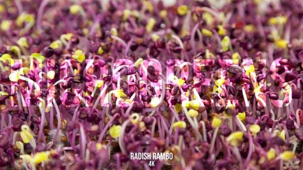 Thumbnail for Microgreens Radish Rambo 2