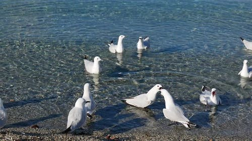 The seagull shout at each other