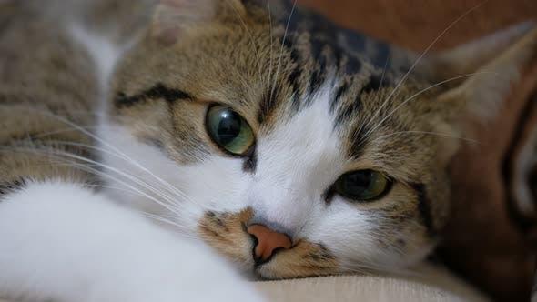 Thumbnail for Sleepy Cat
