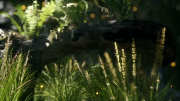 Horizontally Bending Tree Trunk Ferns Growing Sunlight Shining