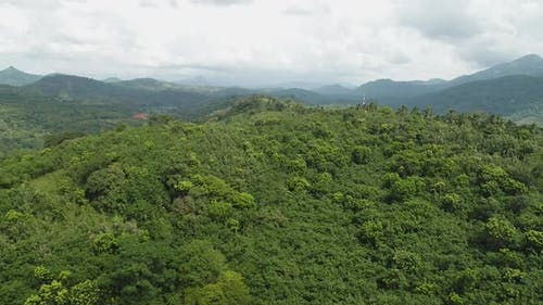 Flyover A Dense Forest Covered Mountain