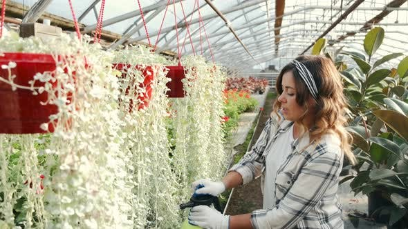 Thumbnail for Woman Watering Plants at Indoor Plantation