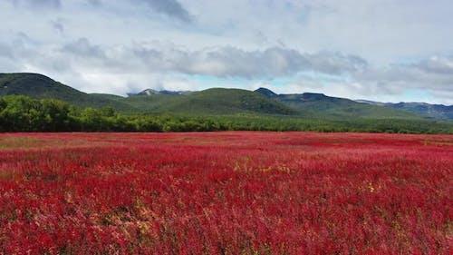 Blooming Flowers Willowherb Field