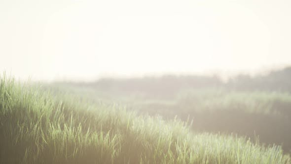 Thumbnail for Green Field with Tall Grass in the Early Morning with Fog