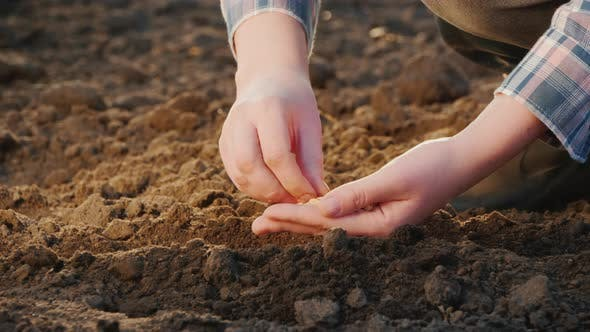 A Person Plants Seeds in the Soil