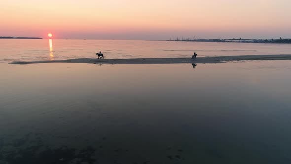 Thumbnail for Horses on Beach at Sunset