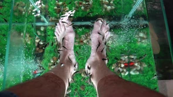 Thumbnail for Foot