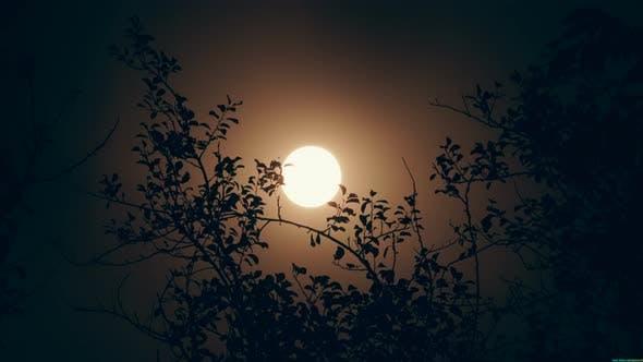 Image result for rayo de luna entre ramas