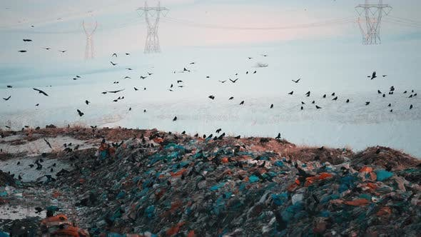 Garbage Dump Area