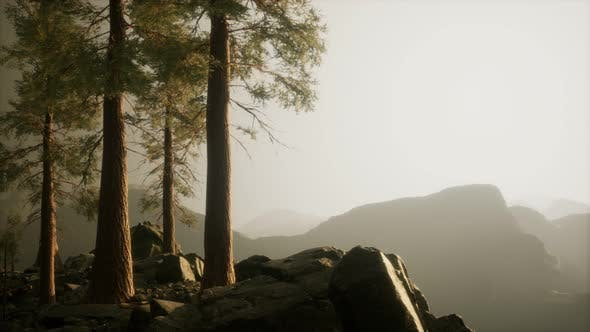 Thumbnail for Trees in Fog in Mountains