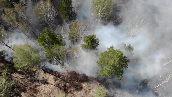 Epic Aerial View of Smoking Wild Fire. Large Smoke Clouds and Fire Spread. Amazon and Siberian